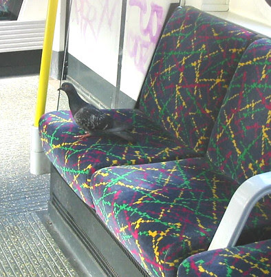 Pigeon on Tube Seat - Hammersmith & City Line