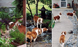 How To Create A Dog Friendly Yard Kg Landscape Management