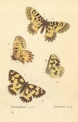 papillons d 15