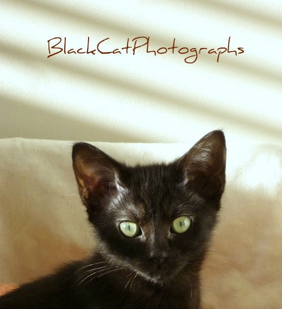 Animal photo, black cat picture, kitten 5x7 wall art, cute pet photograph