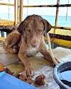 El hermoso final para el perrito que fue rescatado en altamar a más de 200 km de la costa