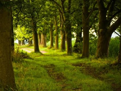 Download 5300 Koleksi Wallpaper Pemandangan Hutan Foto HD Terbaik