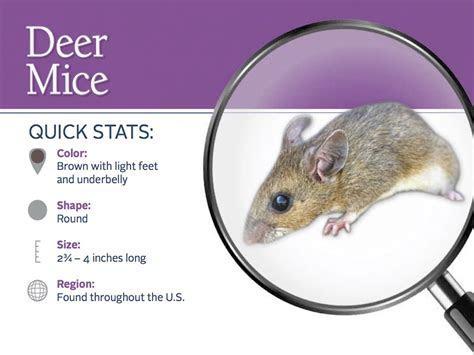 Mice   Pest Control   Parkersburg, Marietta, Athens