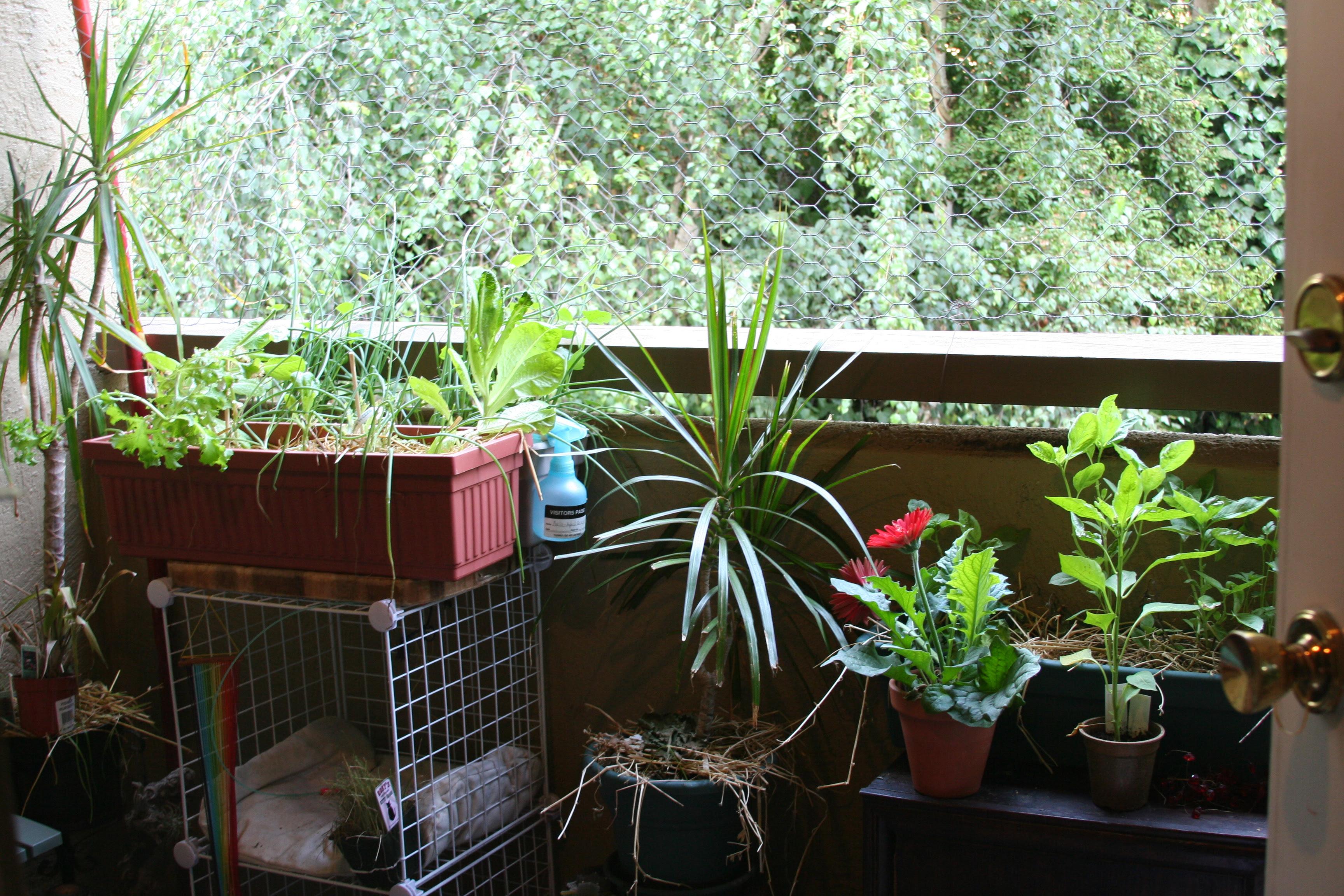 Terrace Gardening Ideas | Homsgarden