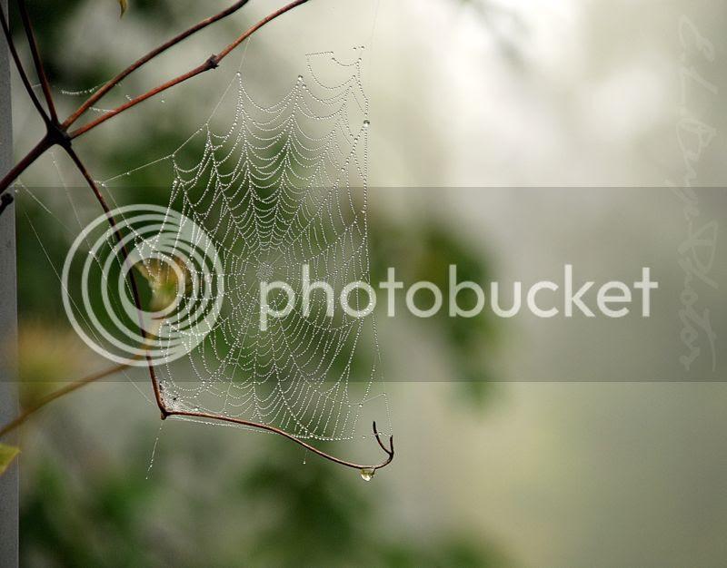 Misty Morning photo SmallWeb.jpg