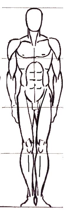 dessiner le corps (Cours d'anatomie) STAPS