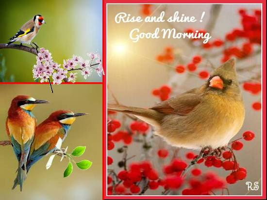 Sweet Greetings For A Lovely Morning Free Good Morning Ecards 123