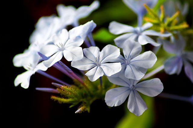 Flower Macro: Phlox? [enlarge]