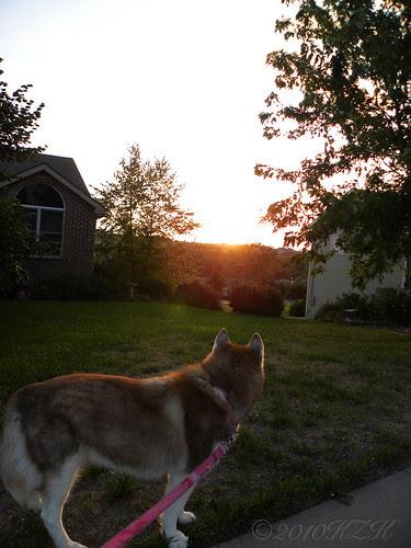 DSCN6742 Amber & the sunset