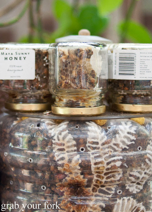 live honeycomb by maya sunny honey at the grounds of alexandria markets