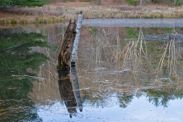 reflections, Maudslay State Park