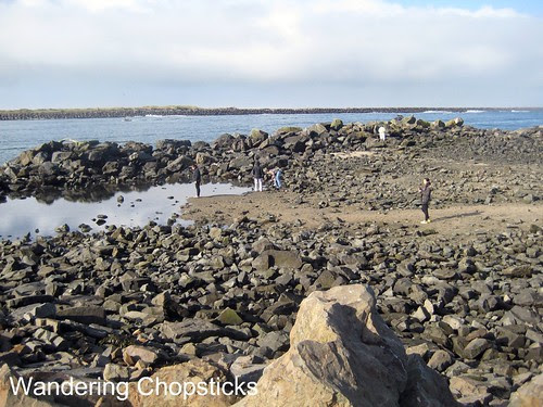 6 Searching for Tide Pools 8