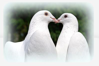 Weddings White Dove Release