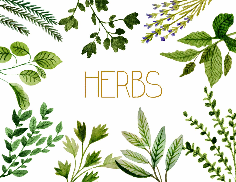 Herb Clip Art Photos