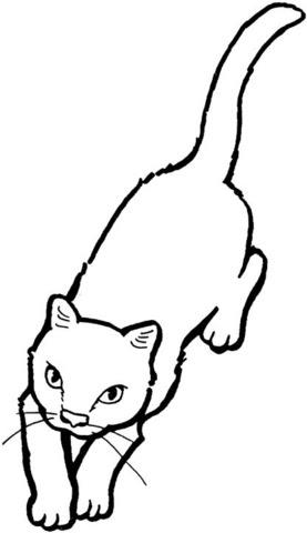 Dibujo De Gato Jugando A Atrapar Objetos Para Colorear Dibujos
