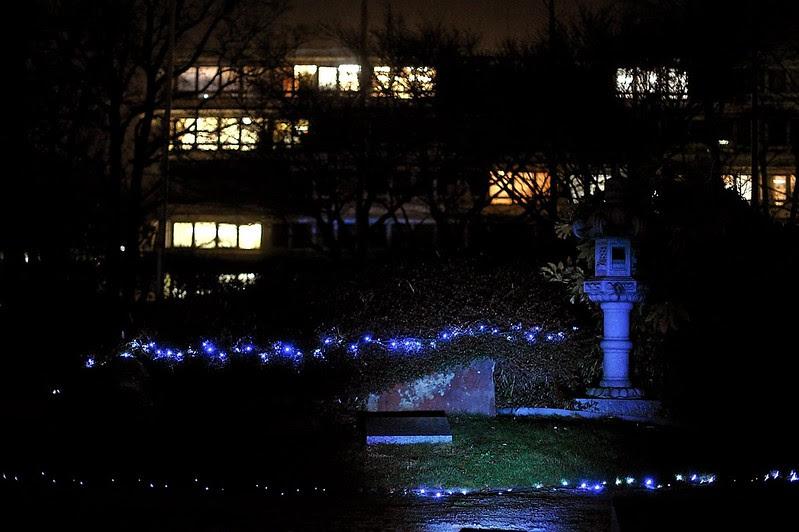 Evry Daily Photo - Cite Administrative - Le Jardin Japonais - Illumination