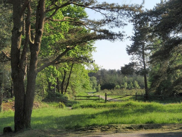 Haldon Forest Park Derek Harper Cc By Sa 2 0 Geograph
