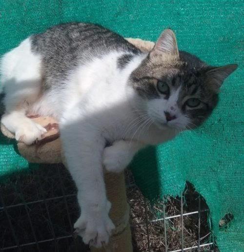 Gatito rechazado por muchos finalmente halla el amor junto a una niña de necesidades especiales