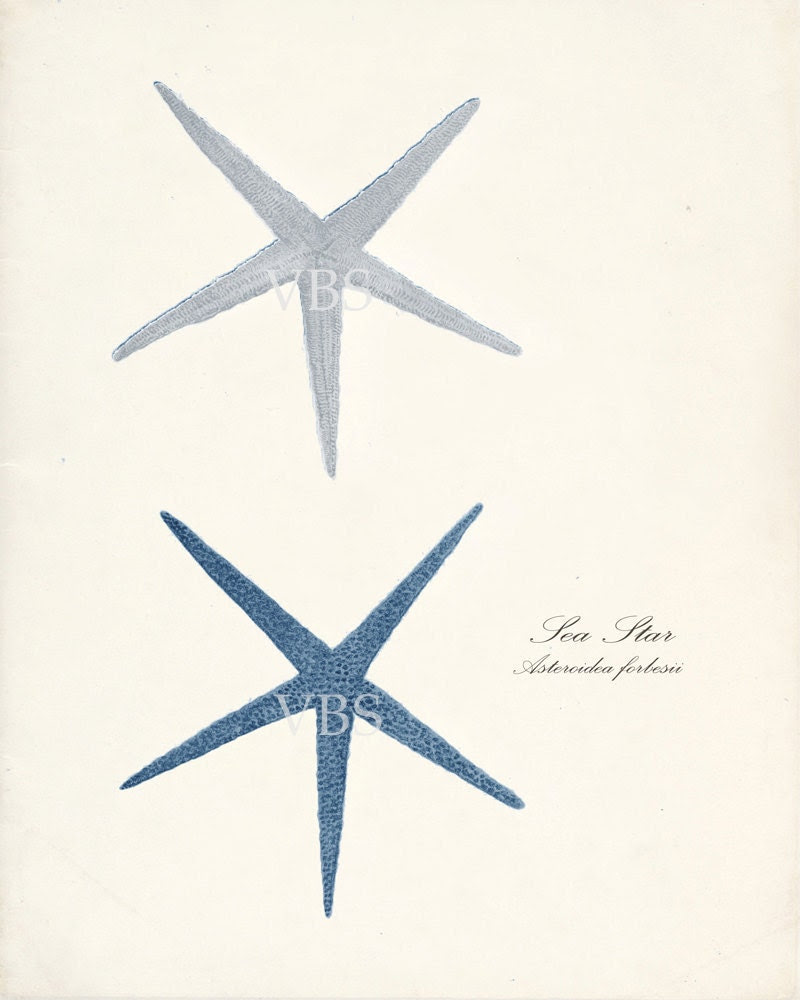 Sea Shell Illustration -Two Vintage Sea Stars Wall Decor Print in Shades of Blue 8x10 - vintagebytheshore