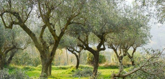 Τα δικαιολογητικά για ελαιοκαλλιεργητές και αμπελοκαλλιεργητές στην Αίτηση Ενιαίας Ενίσχυσης