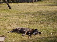 tala cody backyard 03 116