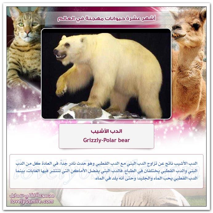 أشهر عشرة حيوانات مهجنة في العالم
