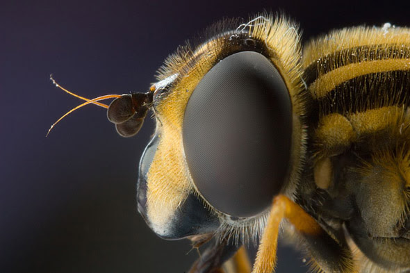 Fotos macro de insectos