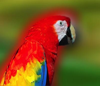 El Papagayo cuidados especiales 2