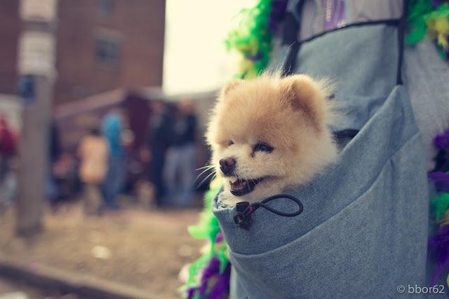 Puppy Pom