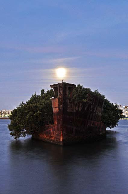 "perierga.gr - Ένα ""κατάφυτο"" πλοίο... χάρμα οφθαλμών!"