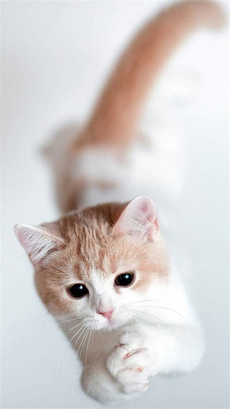 cat wallpaper iphone   iphone wallpaper