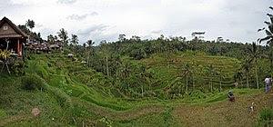 English: Tegalalang rice terrace Ubud Bali 201...