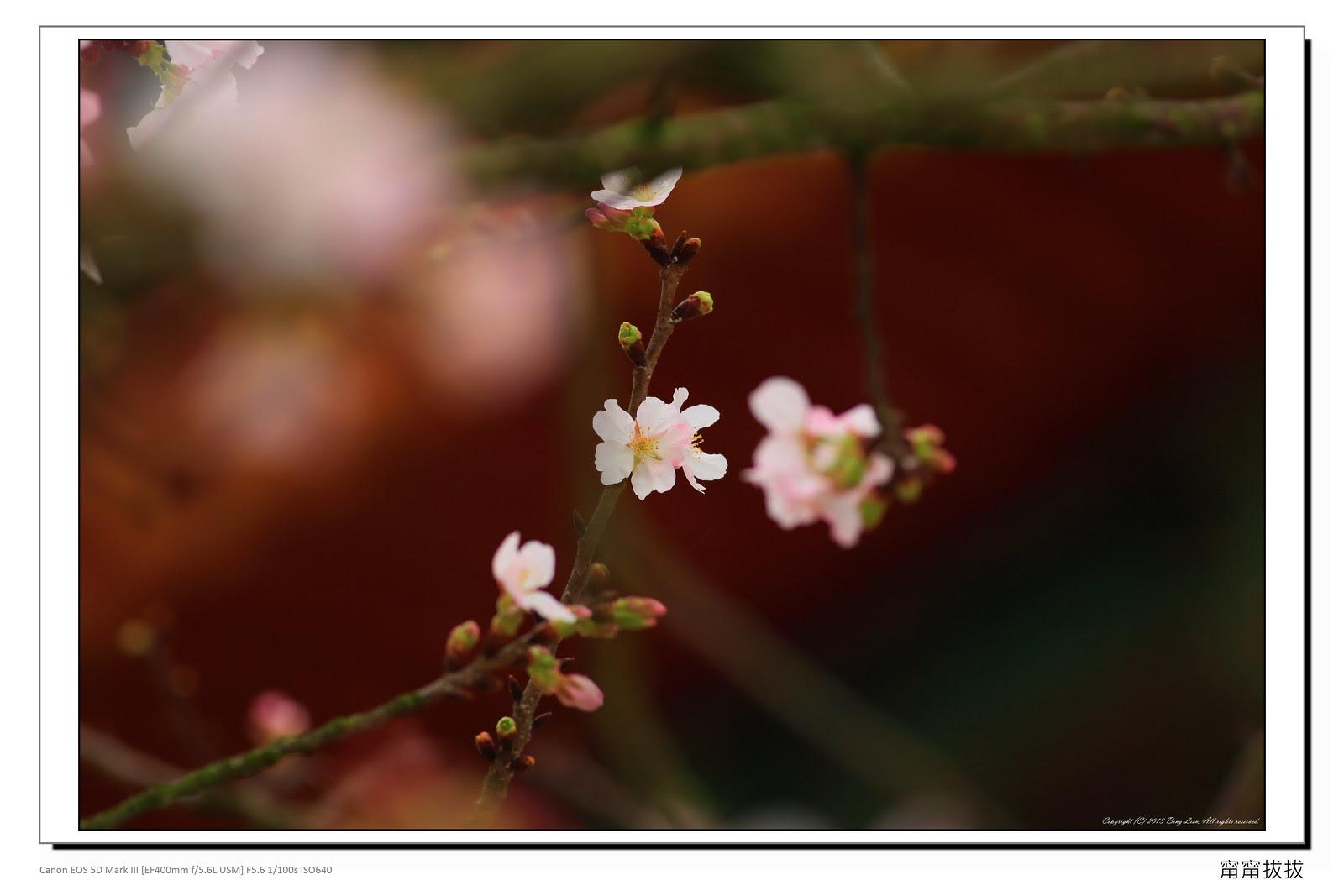 frame_BING8576