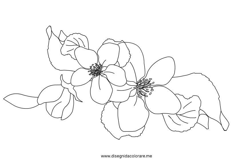 Disegni Fiori Di Pesco Coloring And Drawing