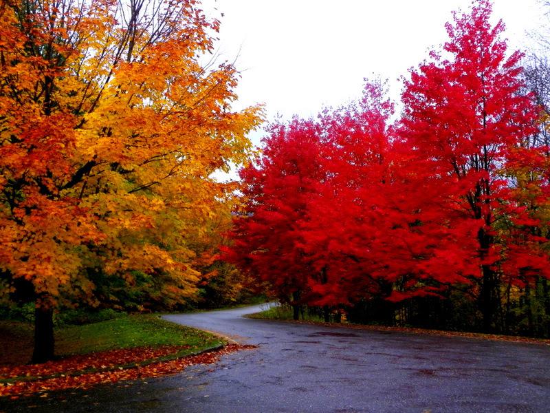 Quebec Autumn