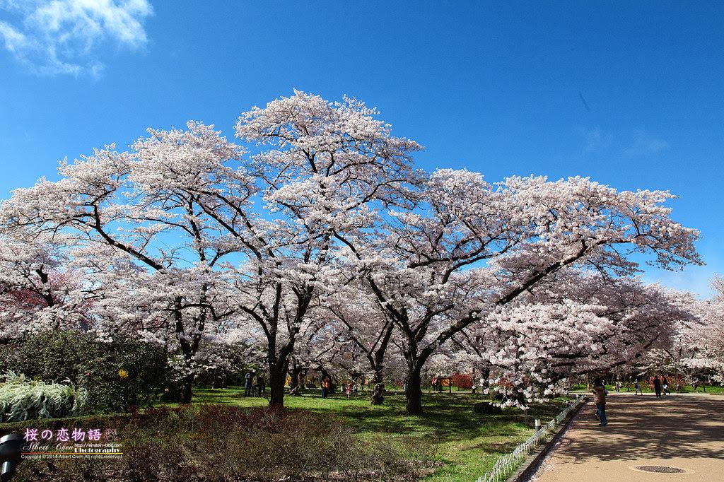 2014-04-04-14h43m35IMG_4756