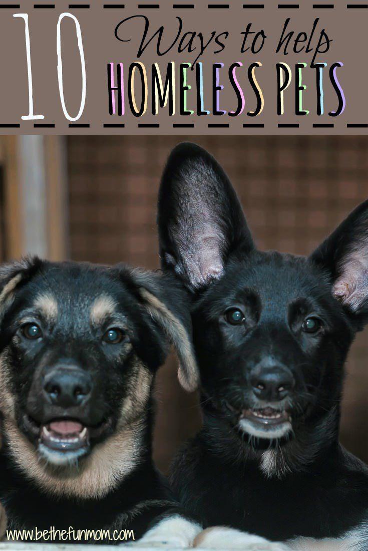 10 Ways to help homeless pets!