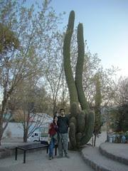 Junto al cactus