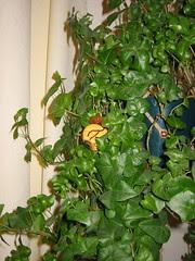 Crispy checking camouflage
