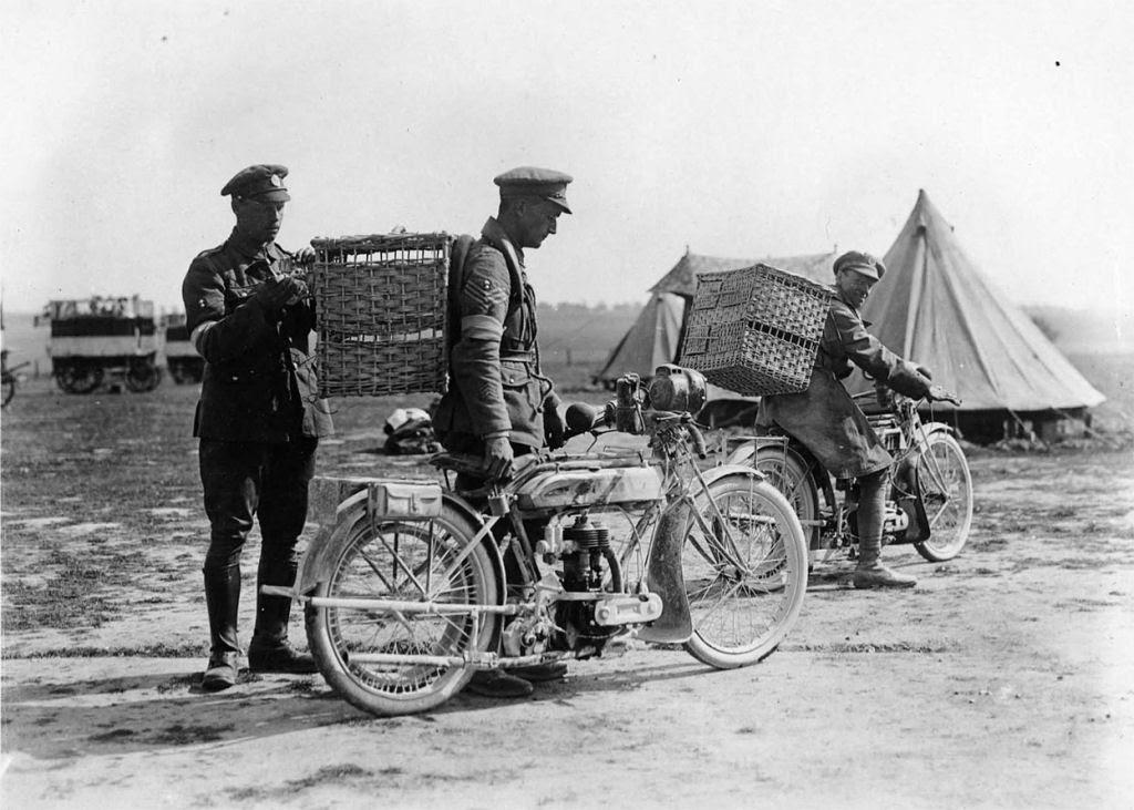 Os animais também lutaram na Primeira Guerra Mundial 17