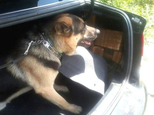 Polícia Federal usou cães farejadores para encontrar a droga (Foto: Divulgação/ Polícia Federal)