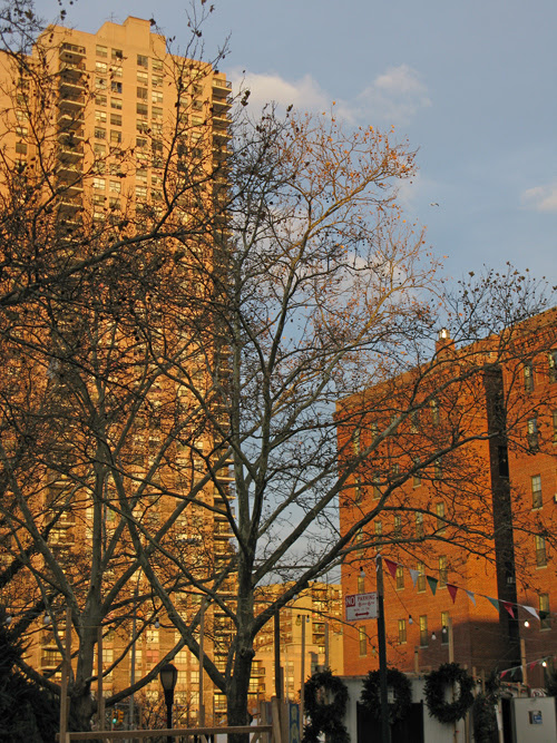 a tree on the west side at sunset, Manhattan
