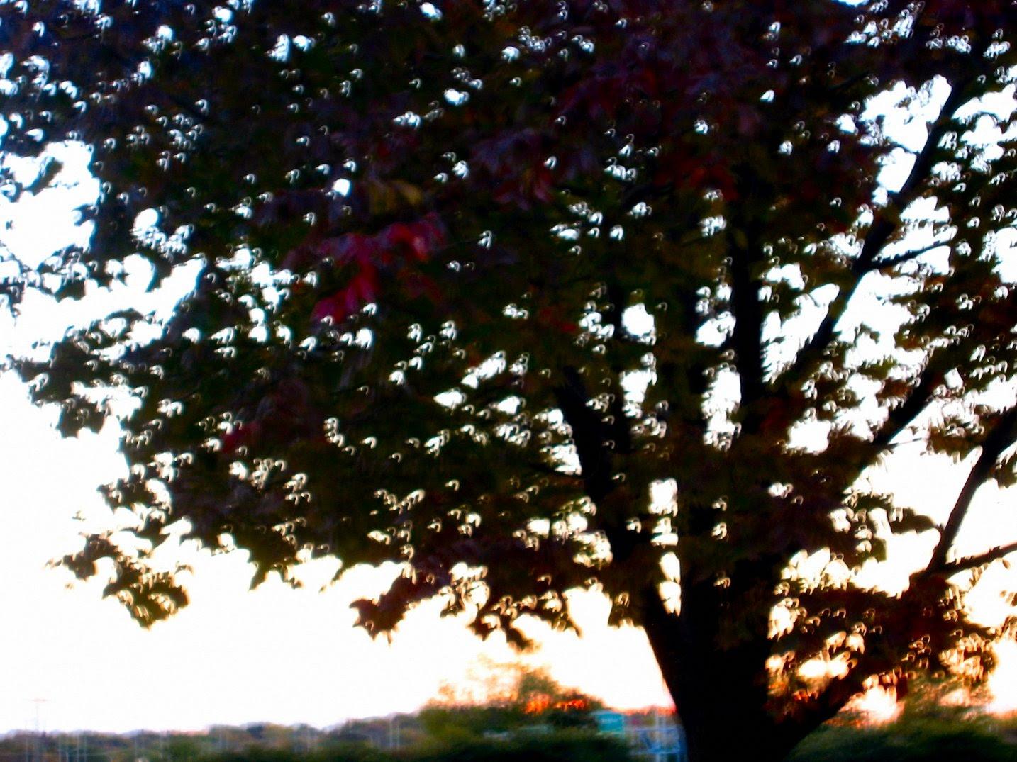 Wiconsin Autumn Photo - soul-amp.com