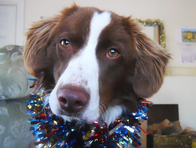 Christmas Ben (1)