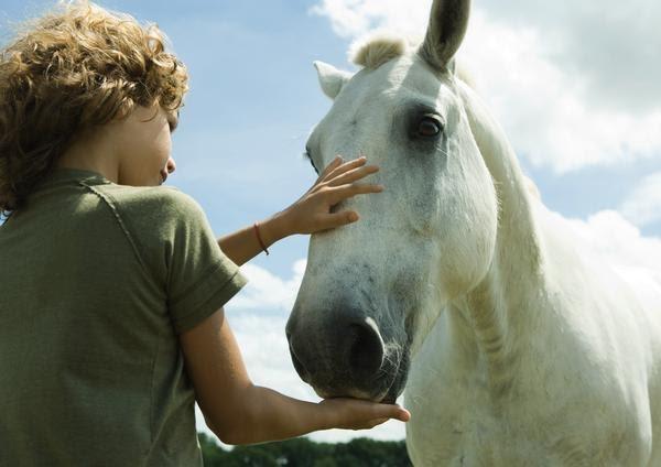 Si os gustan los caballos, os interesan estas jornadas