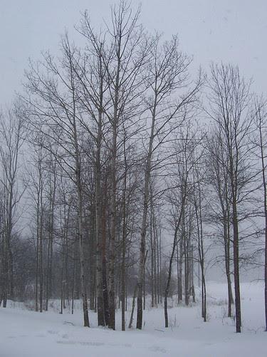 The bleak landscape of February