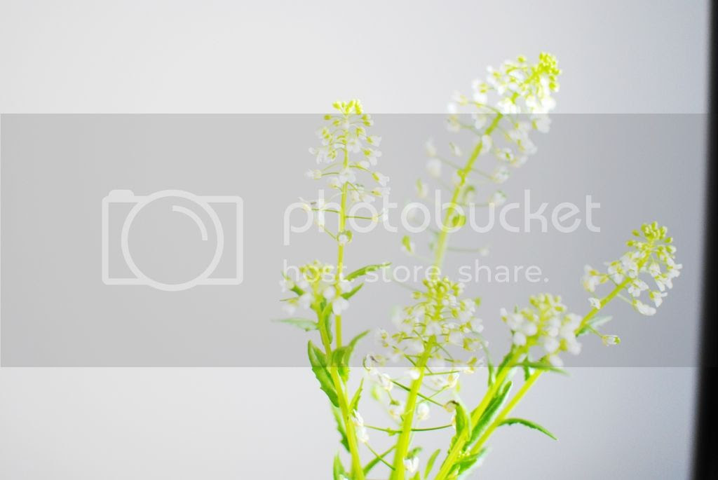 photo DSC_0114_zpswlcwrkex.jpg