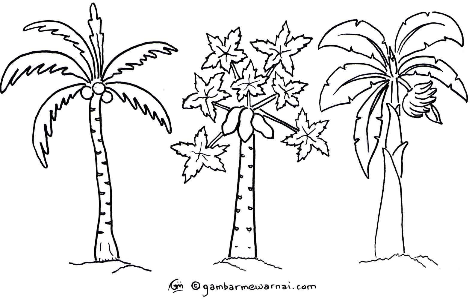 Mewarnai Gambar Pohon Colouring Pages Page 3 Free Gambar Polos