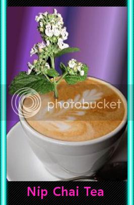 catnip latte