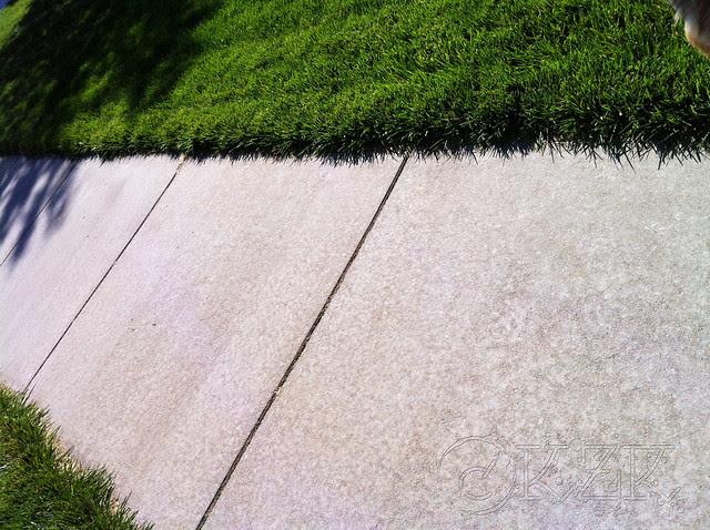 IMG_1618 Umm... the sidewalk